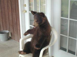 bear in chair_01