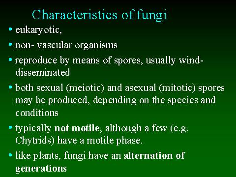 Putting The Fun In Fungi. Professional Definition 01