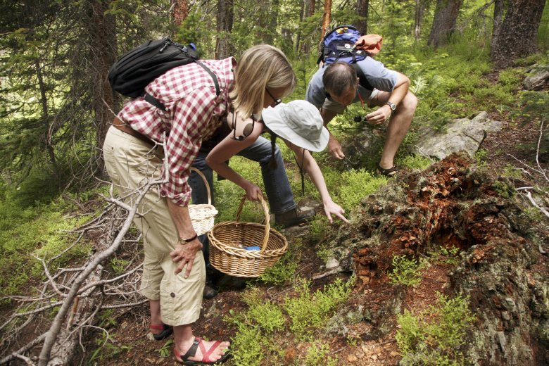 Mushroom hunters huddle over a find during a mushroom hunting expedition.
