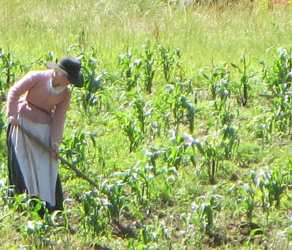 farm girl-06 cropped