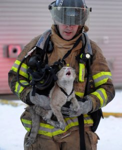 firefighter and cat