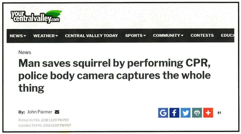Squirrel headline