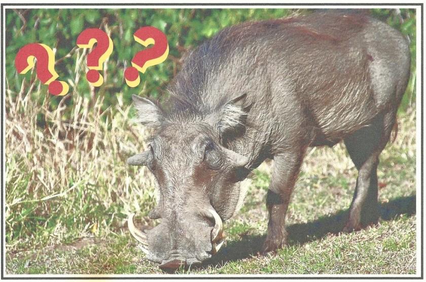 Boar (2)