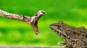 frog snake_01