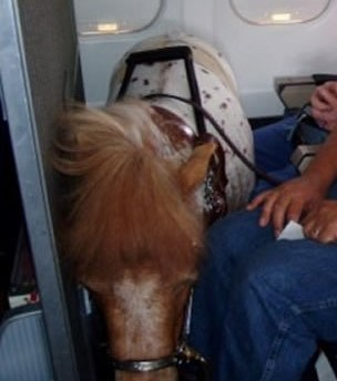 horse on plane better cropped cropped