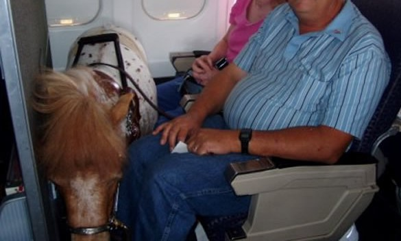 horse on plane better cropped