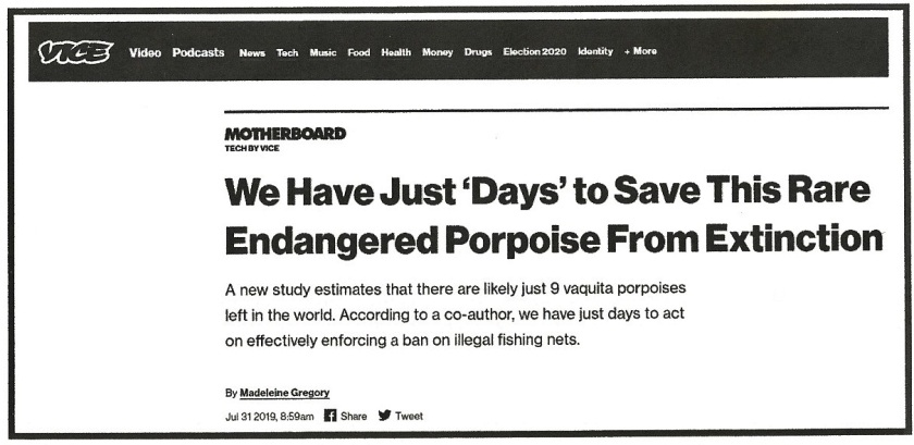 Vaquita headline (2)