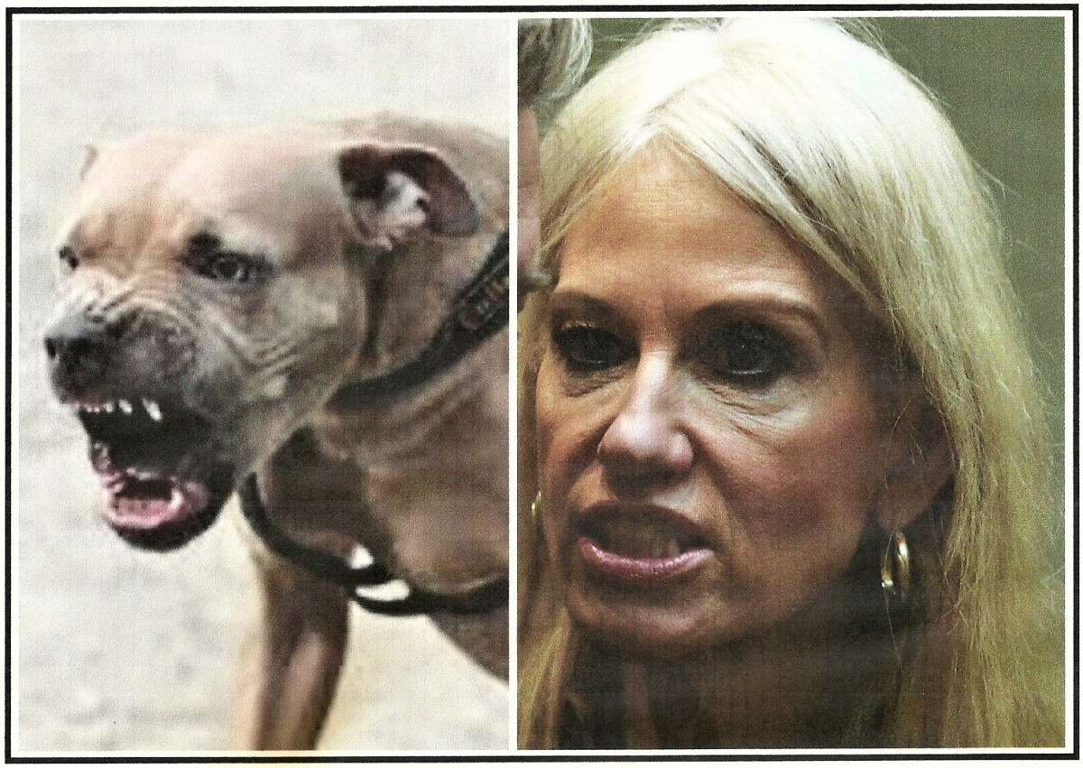 What Do Kellyanne Conway And This Vicious, Nasty Pit Bull Have InCommon?