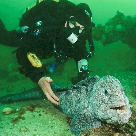 wolf eel and diver cropped
