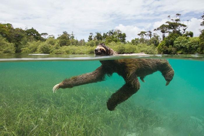 sloth 4 smaller
