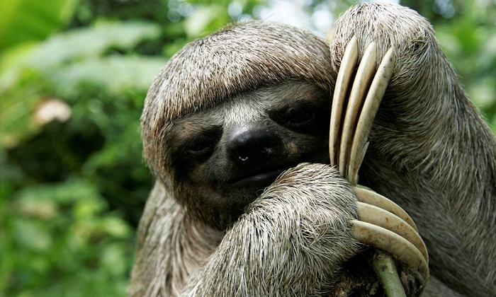 sloth 7 smaller