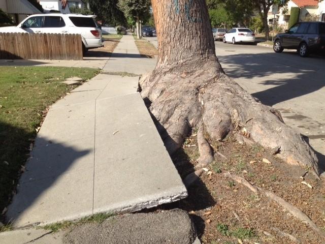 buckled sidewalk