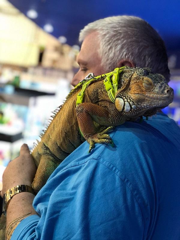 iguana cropped