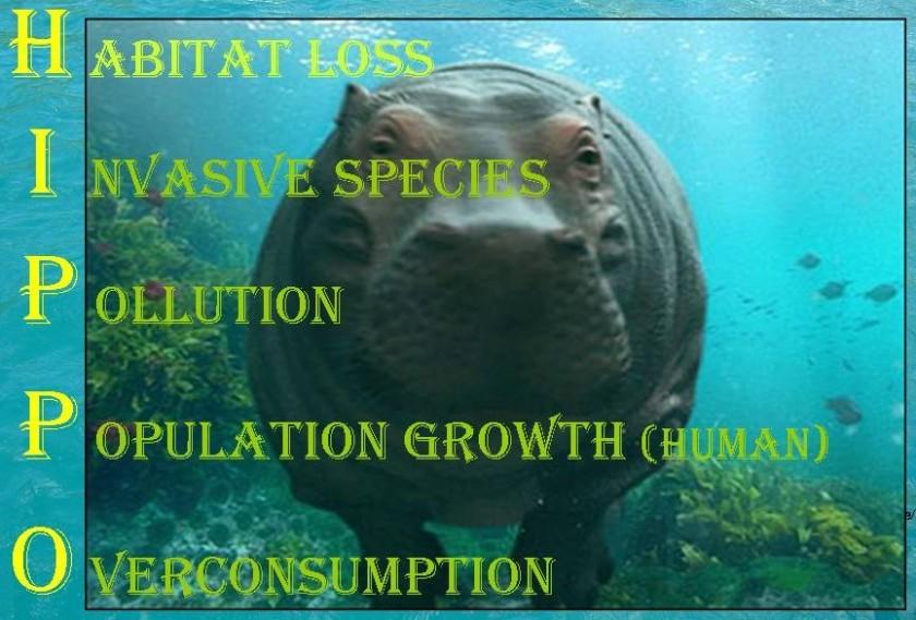HIPPO acronym_01 cropped