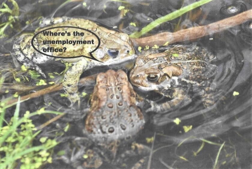 Toads unemployment (2)