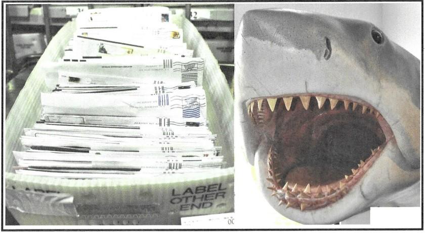 Shark (2)