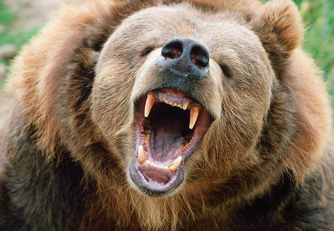 Here Are The BearFacts