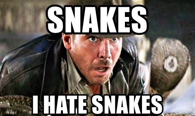 What I Feel About Bugs Is What Indiana Jones Felt AboutSnakes: